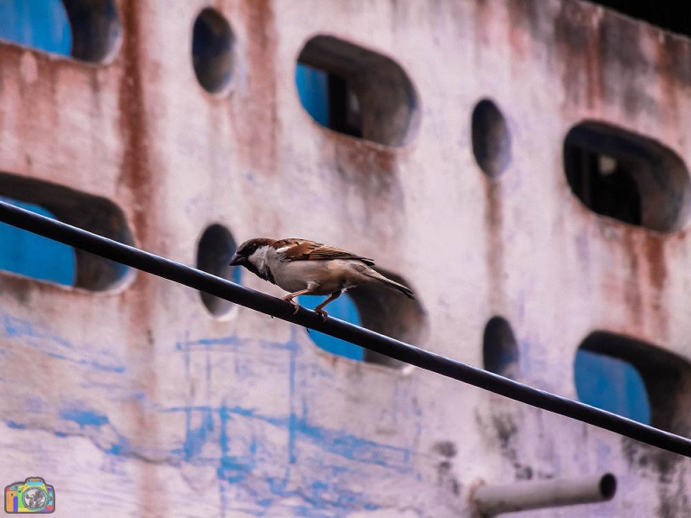 Waiting for you ......... by Khandaker Almas Mahmud Ador