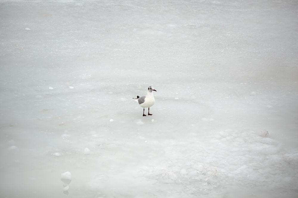 White by Sasa Ko.