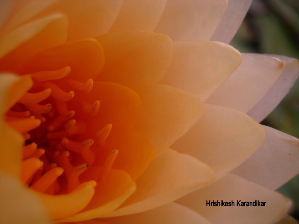 30.jpg by Hrishikesh Karandikar