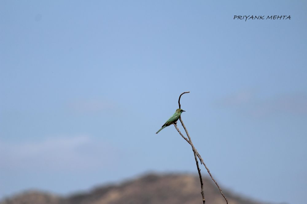 Green Bird(actually i dont know the name :P ) by Priyank J Mehta