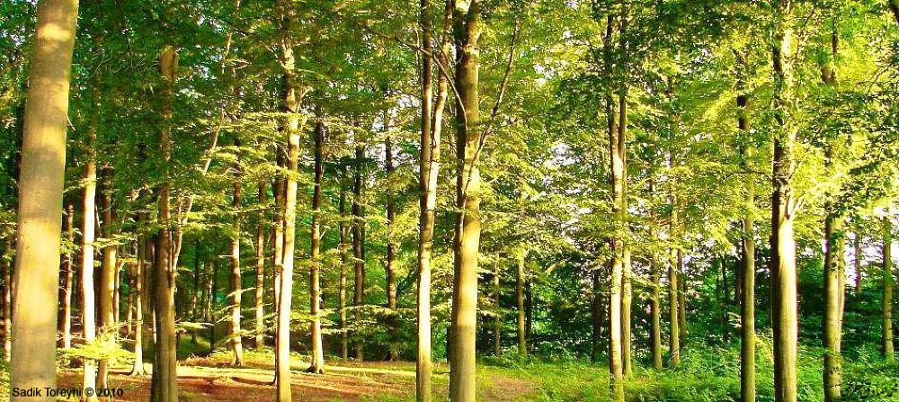 Forest,Hørsholm,Denmark by Toreyhi