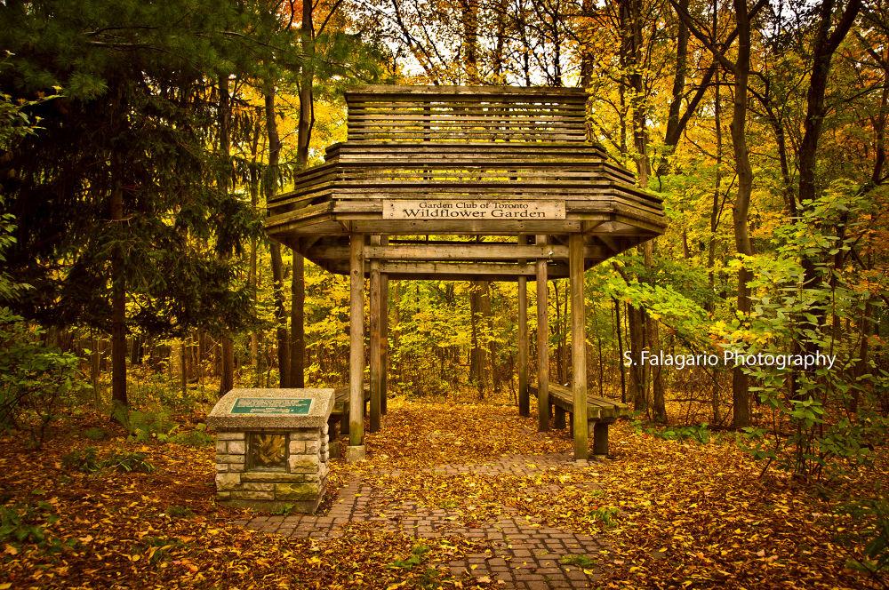 Autumn Landscape by sfw_photos