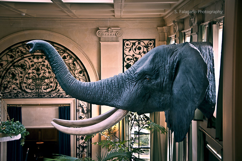 The Elephant Trophy, Rochester NY by sfw_photos