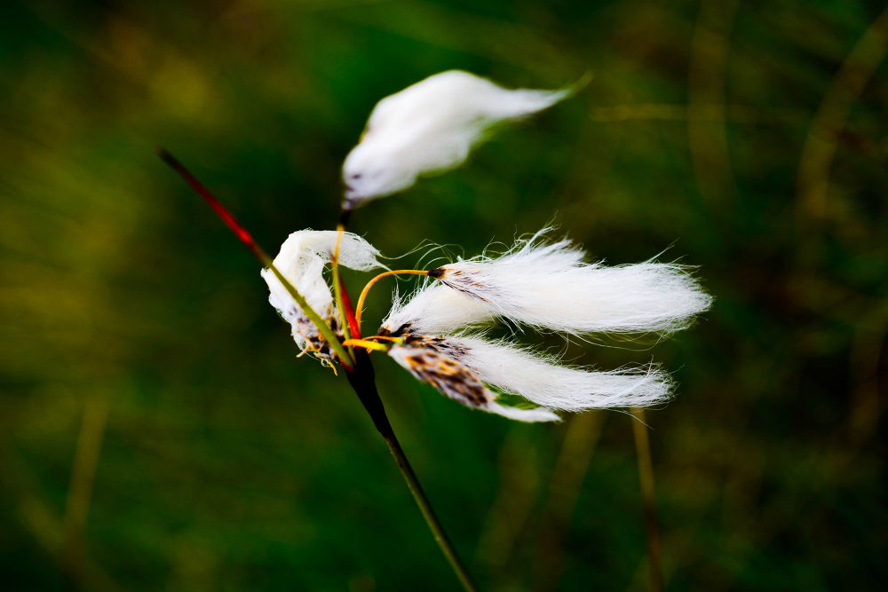 Beautiful Flower by ebrahimi