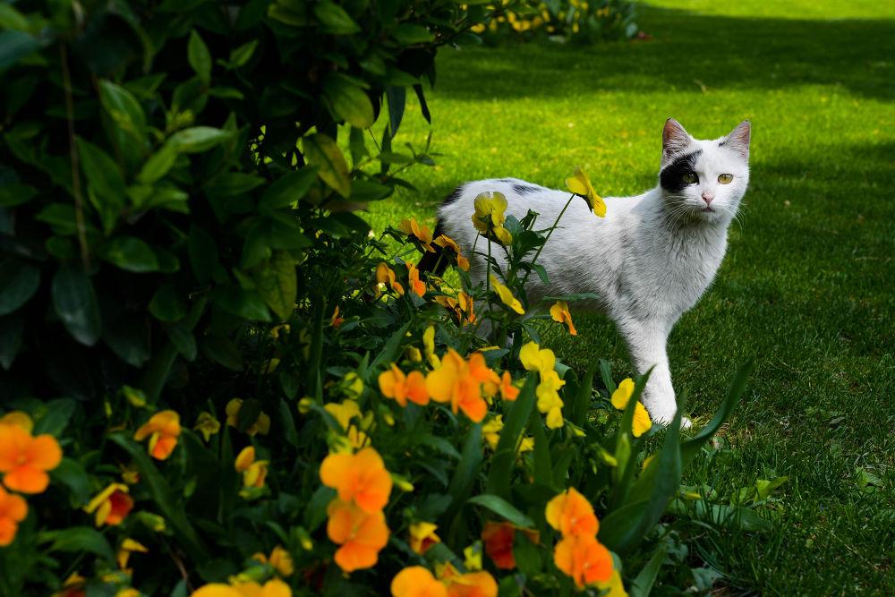 Staring cat by ebrahimi