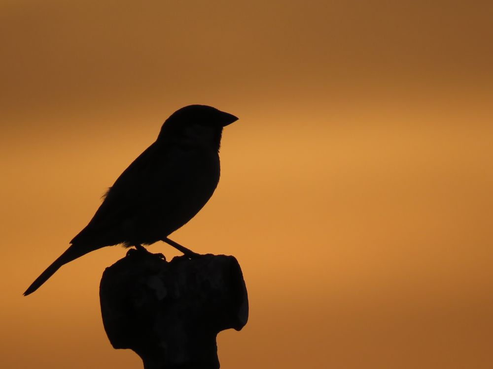 a lonely bird by Sai Krupa Chary