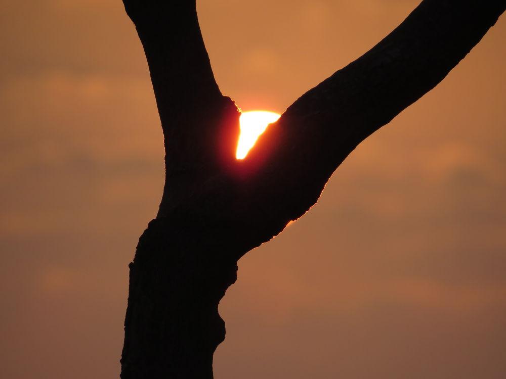 sunrise by Sai Krupa Chary