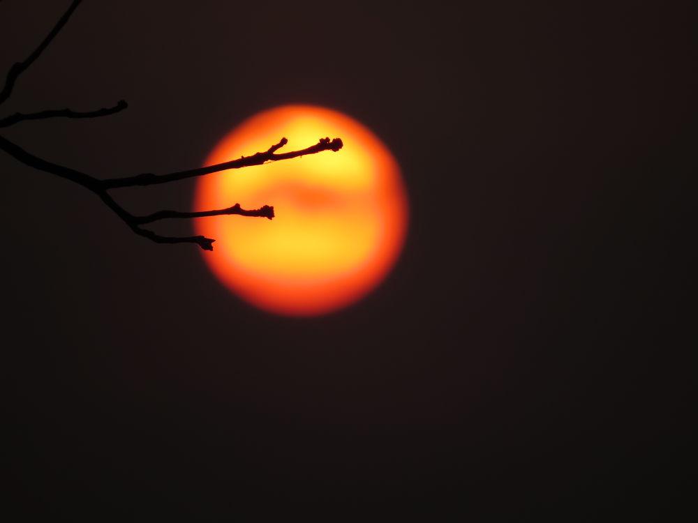 IMG_6764 by Sai Krupa Chary
