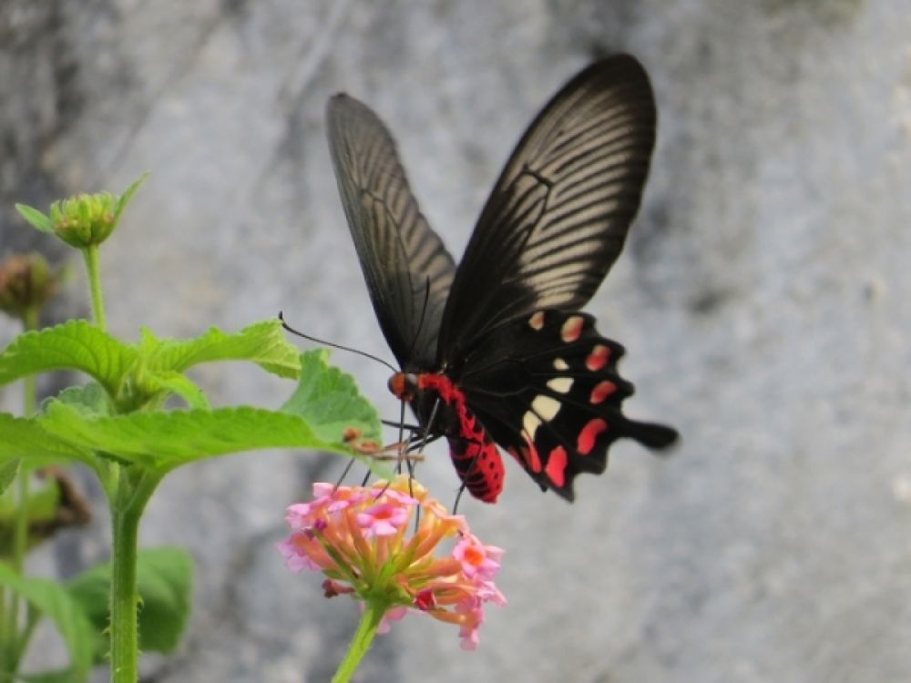 butterfly by Sai Krupa Chary