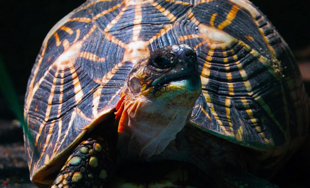 a tortoise by Sai Krupa Chary