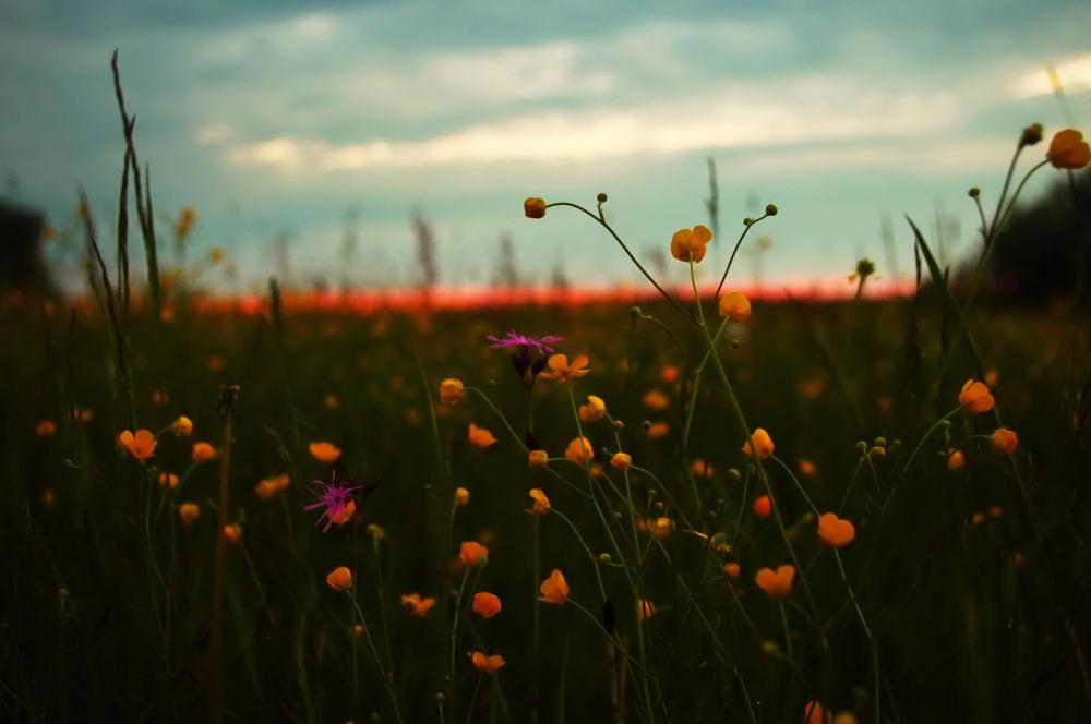 Blooming Sunrise by Emil Gawkowski