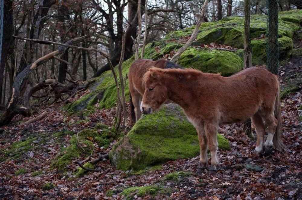 Photo in Random #horse #häst