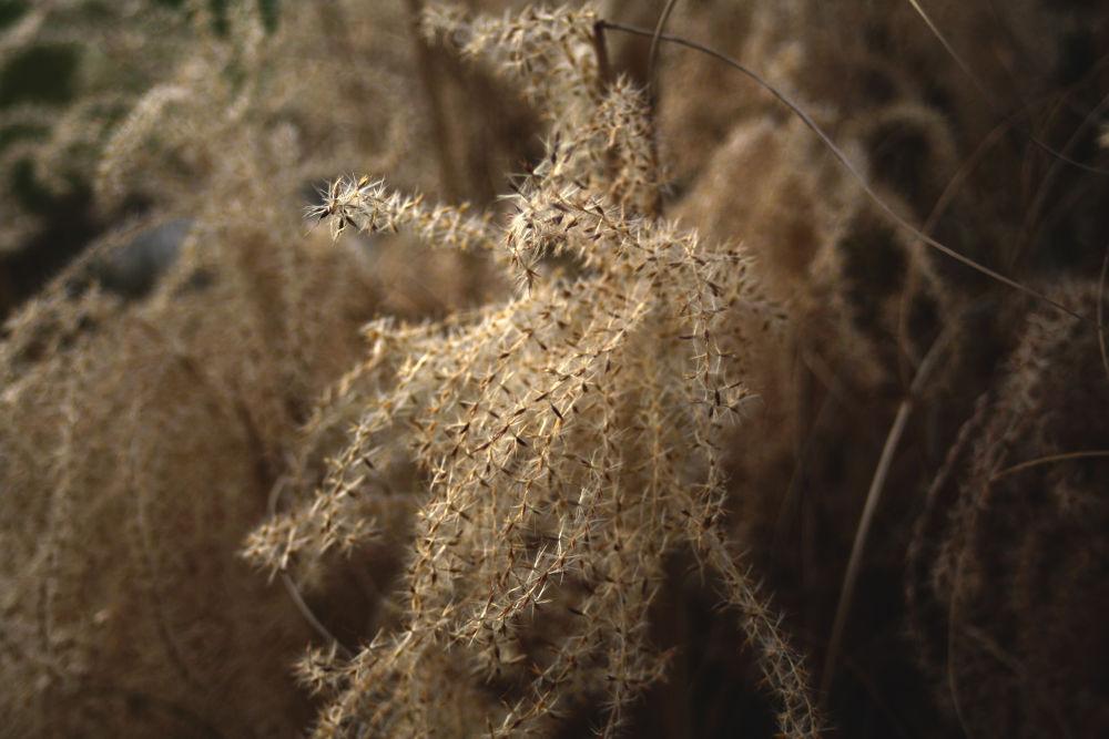 Plant 2.jpg by bozllie