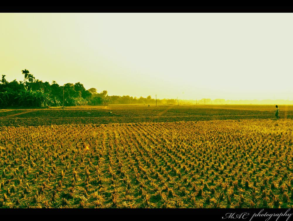 paddy field.....jpg by mac_savoir_et_devoir