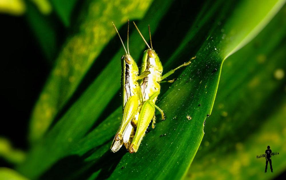 Grasshopper_Bokeh.jpg by ЯΔJJIБ'S PЂØŦØ
