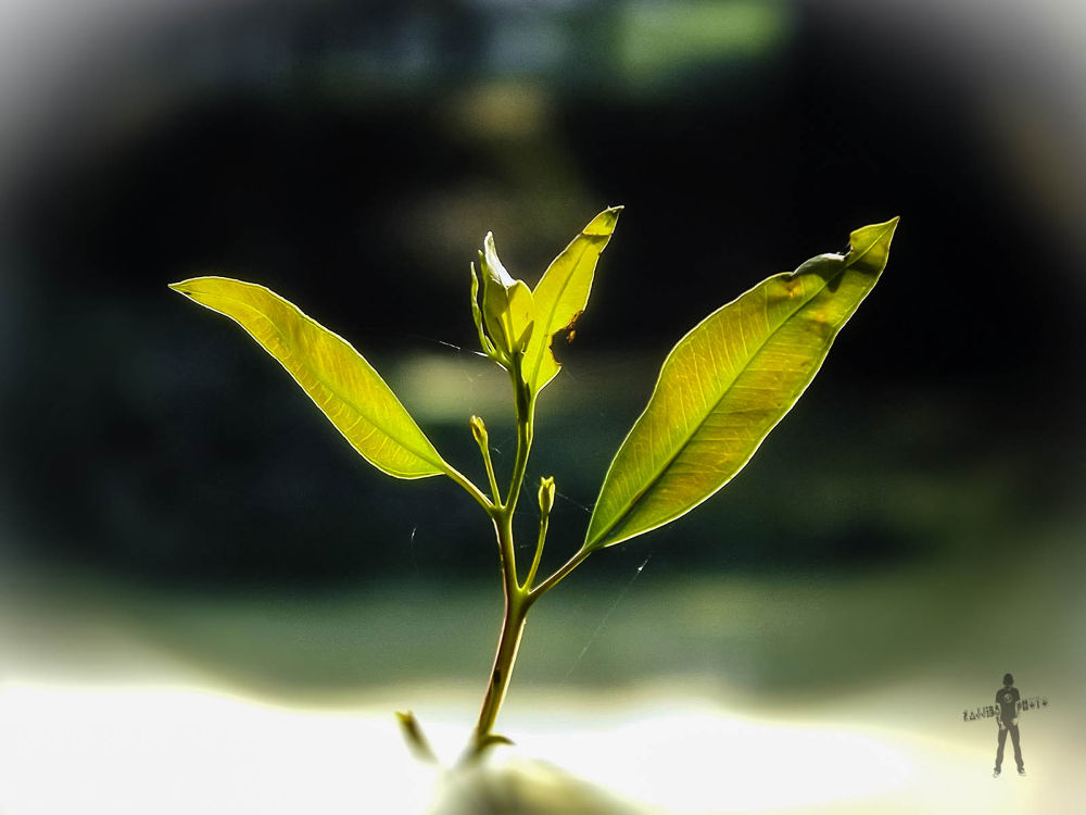 """Leaf """"and the leaves were telling secrets to the wind.""""  by ЯΔJJIБ'S PЂØŦØ"""
