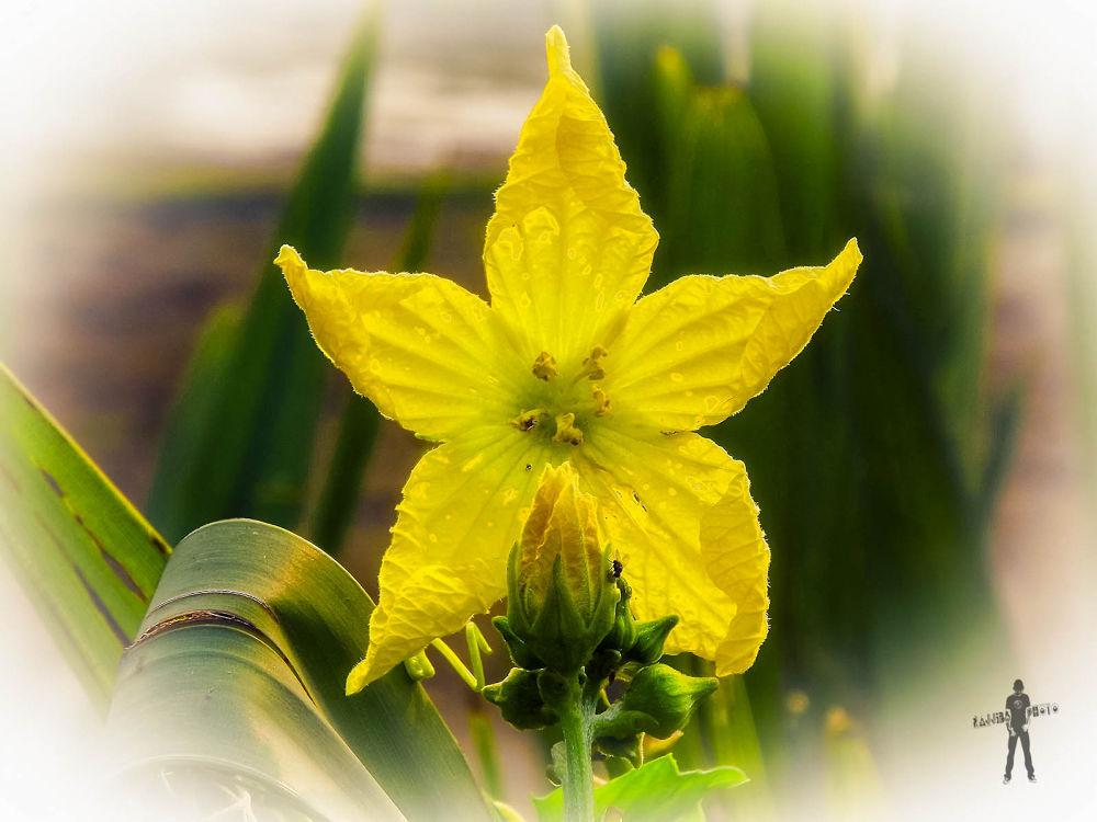 Weeds Flower by ЯДJJIБ'S PЂØŦØ