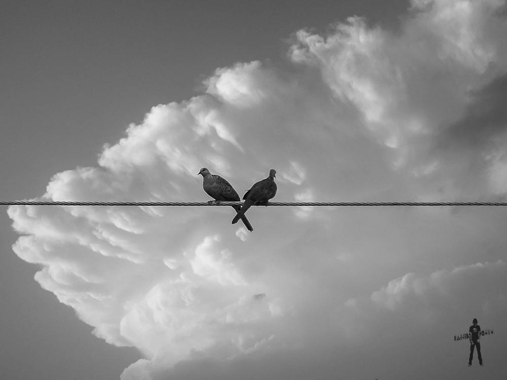 Photo in Animal #animal #nature #sky #cloud