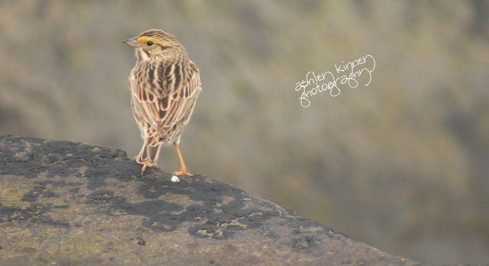 yellow bird.jpg by ashleysharene