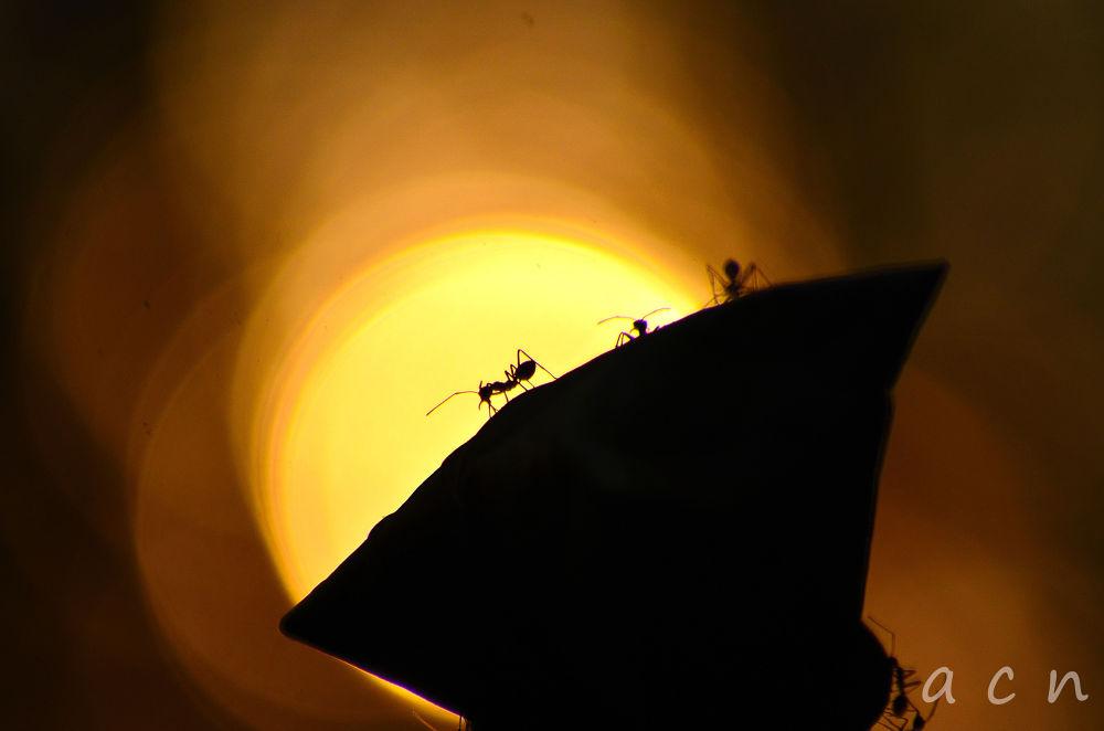ant by anoopanoopcn
