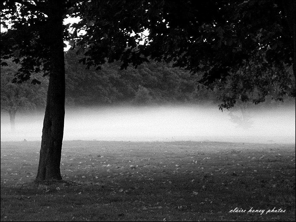 fog in the park by clairehoney186