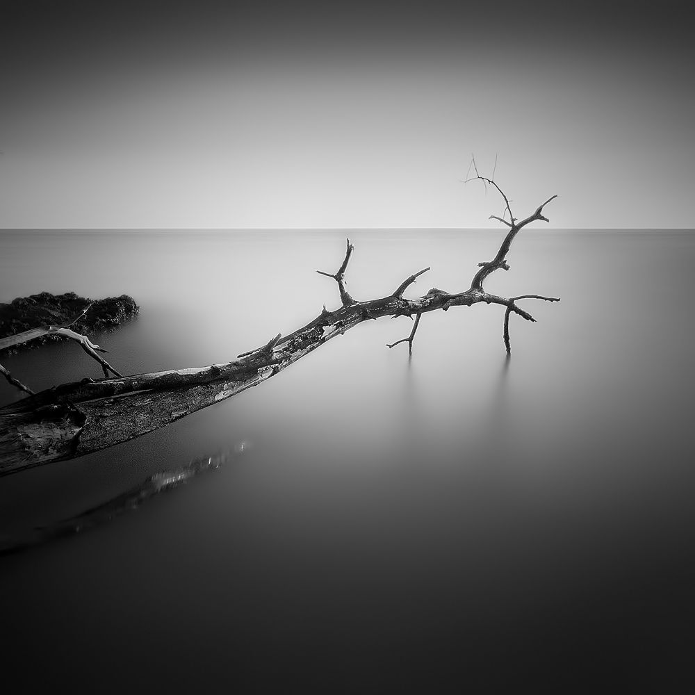 Long Branches by Farizun Amrod