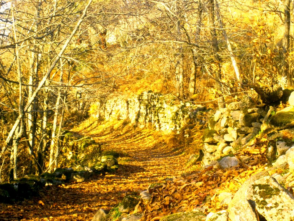 Ruta Castañar-Montánchez V.JPG by juangonzalezdiaz