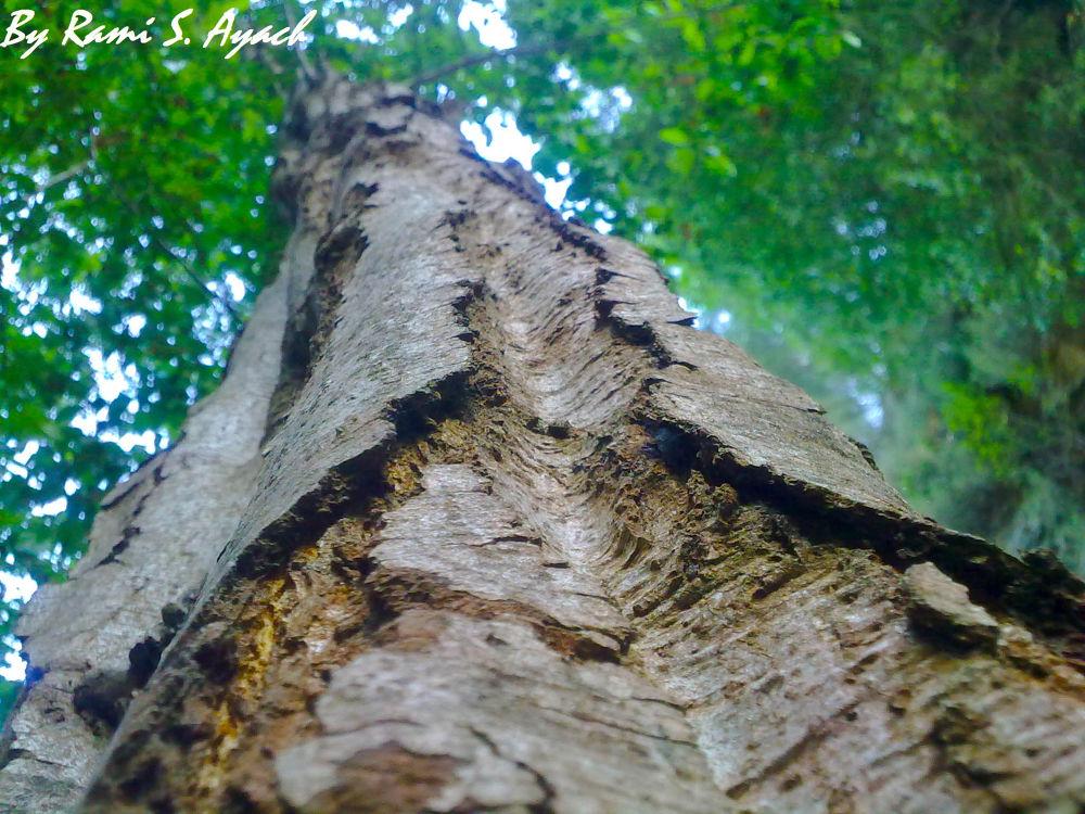 Close Up angle Tree.jpg by ramiayachlp