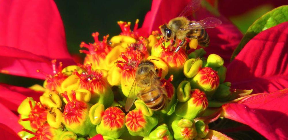 abelha.jpg by CarinaNakai