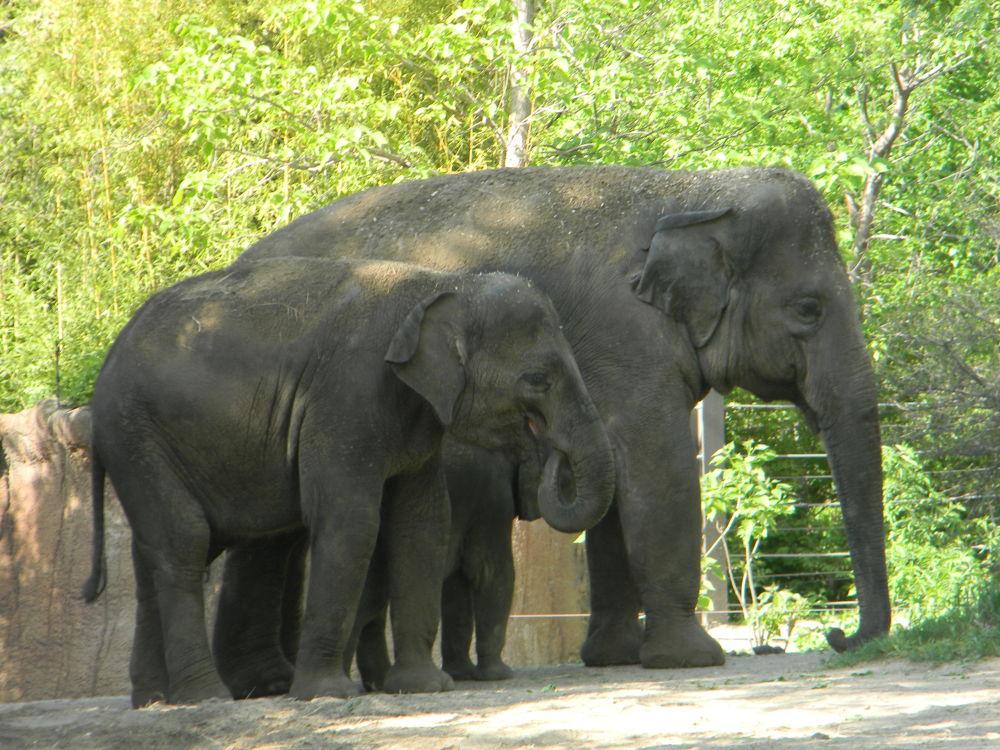 Elephants by biotechgayathri