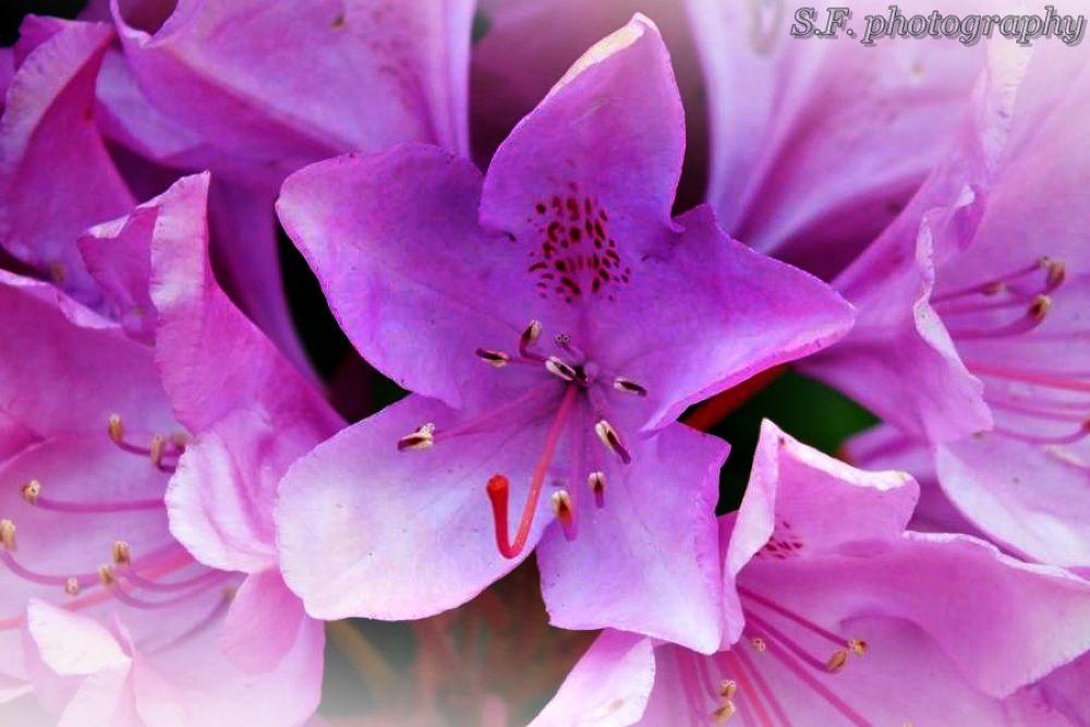Flower 1 by stefaniefiedler73