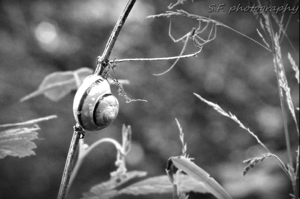 Bug by stefaniefiedler73