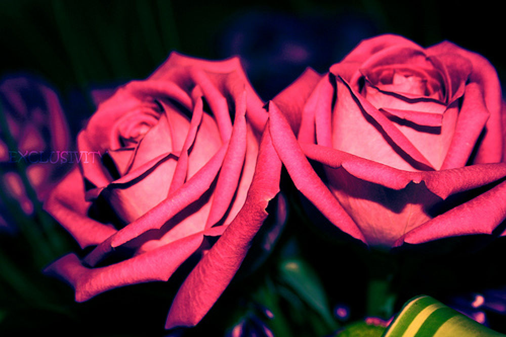 flowers.jpg by hamdan_shawwa