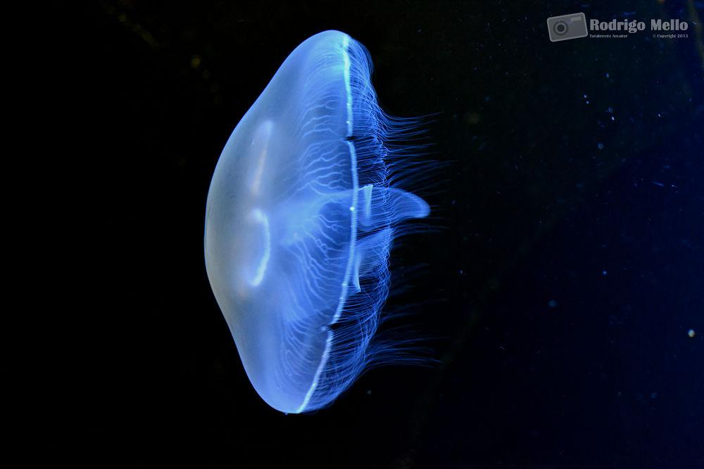 Jellyfish from Crete - Greece 2013 by djopino
