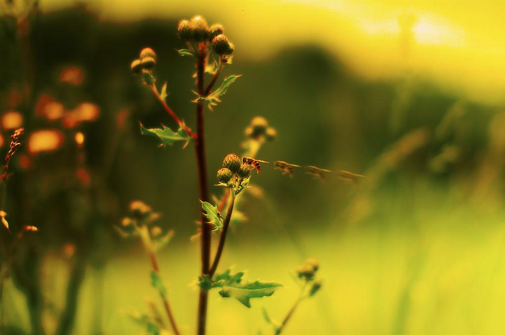 bee by trustr