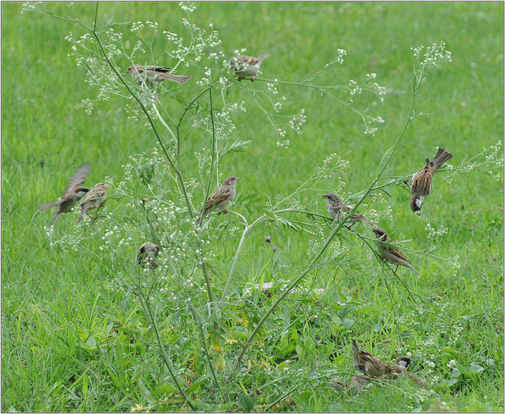 Sparrow tree by venugopalbsnl