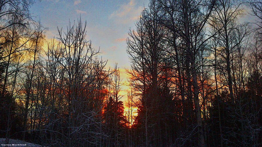 a cold winterday 2014 by carro