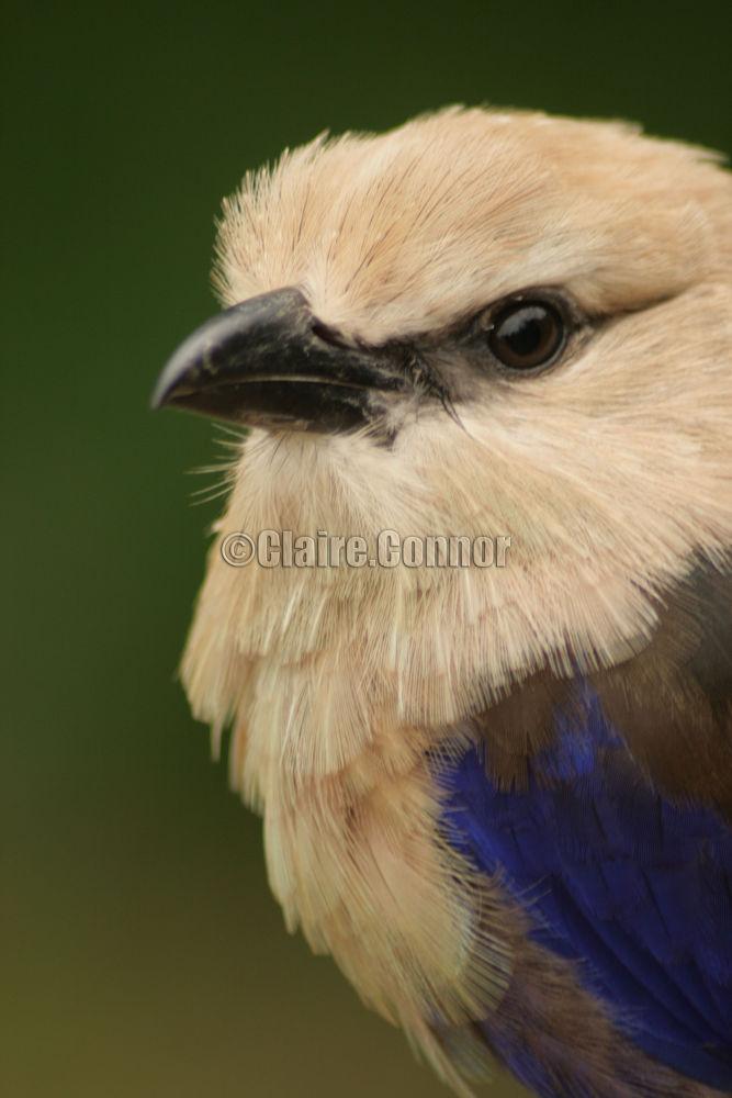 Pretty Bird! by Blodwin1972