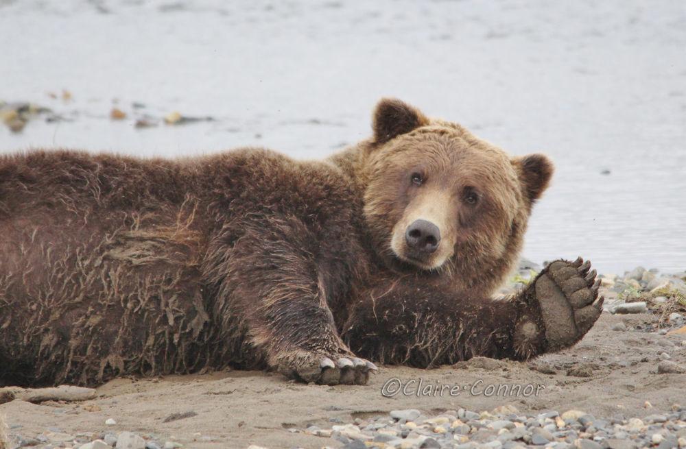 Hey bear! by Blodwin1972