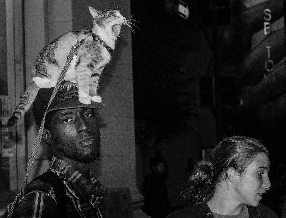 The Cat by michaelmarsolais5