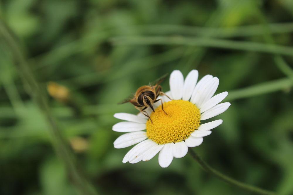 Bee by iskenderdelibas
