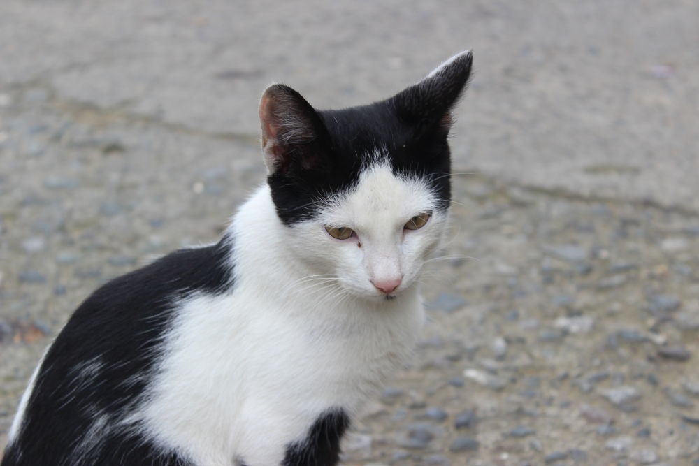 Photo in Animal #cat #animal #good #amazing #best #nice #iskenderdelibas