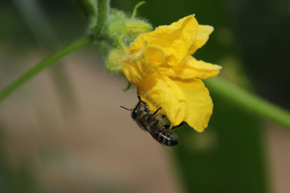 Photo in Macro #bee #macro #landscape #good #animal #nice #best #great
