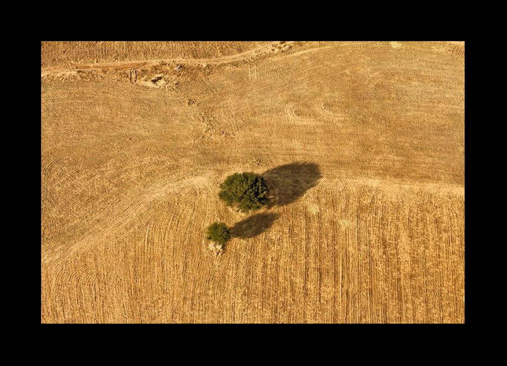 arbol ypasto marco by TonyPhotog