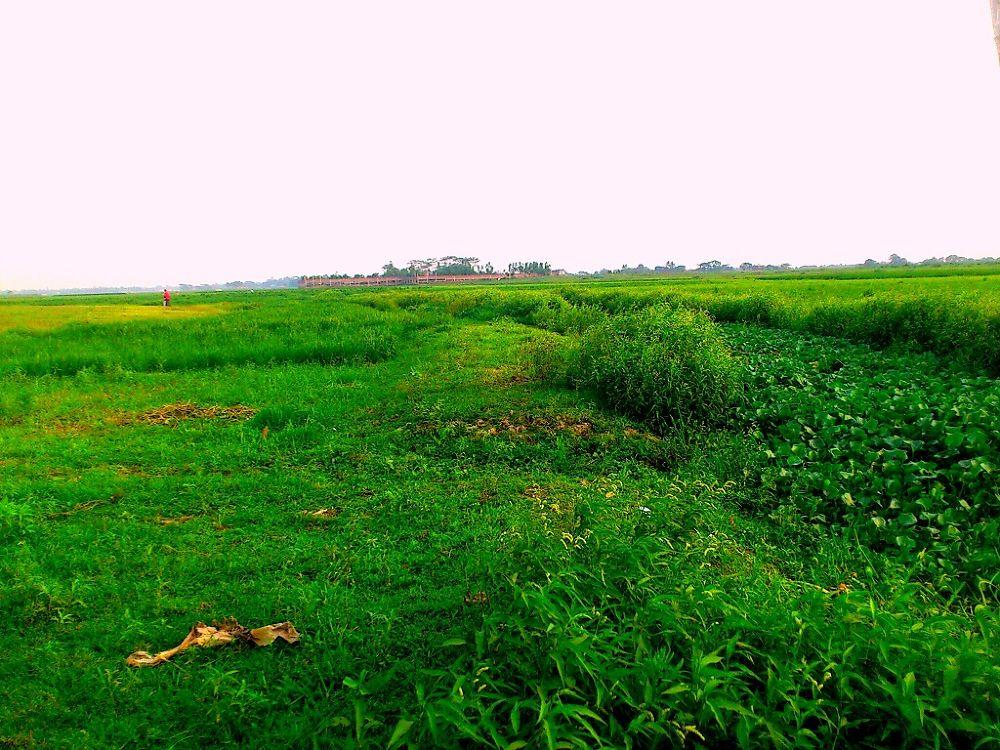 Paddy Field.jpg by Moyan