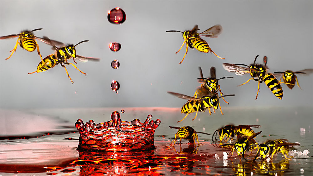 Watercrown and the Wasps by Wolfgang Korazija