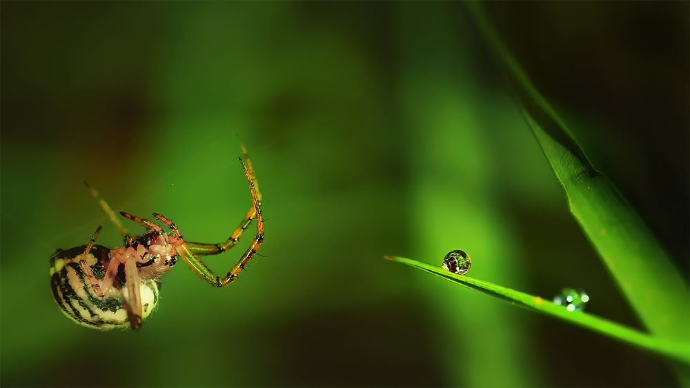 Spider and a Waterdrops by Wolfgang Korazija