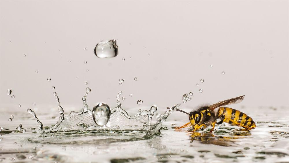 Wasp and Drops by Wolfgang Korazija