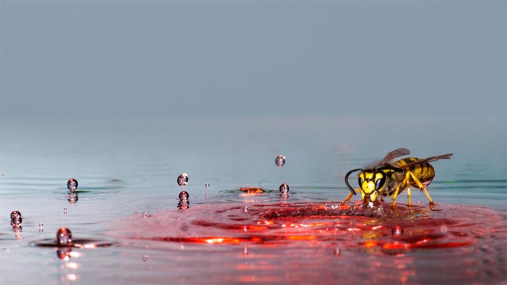 Drops of Symponie by Wolfgang Korazija