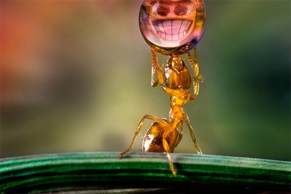 Super Ant by Wolfgang Korazija